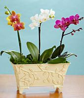 Grow an orchid garden, and support women with ovarian cancer!