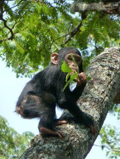 Chimpanzee & Wildlfe Orphan Project, Zambia