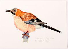 bird+giclee+print+illustration+archival+art+by+EeliArtStudio