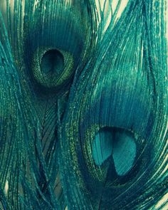 Peacock Feathers Photograph - artwork - other metro - Sweet Moments Captured