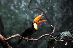 live an extraordinary life - archangvl: Daily Shot Rainforest Animals, Amazon Rainforest, Nature Animals, Pretty Birds, Beautiful Birds, Blue Sky Studios, Tropical Birds, Cute Creatures, Mellow Yellow