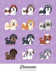 Impresión de arte de Bichón Habanero por doggiedrawings en Etsy