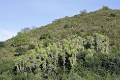 Collinpattersonj Biology, Mountains, Nature, Plants, Travel, Naturaleza, Viajes, Destinations, Plant