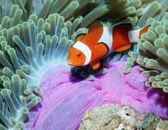 Underwater wildlife in Thailand  #thailand #diving #asia #travel #pinterest #travelblog