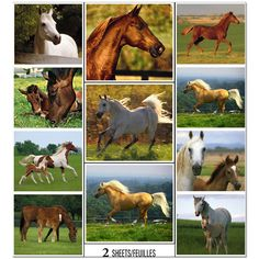 Wild Horses Stickers (2 sheets)