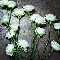 Jessica Zimmerman | zimmermanevents.com  #jessicazimmerman #zimmermanevents #roses #florist #floraldesign