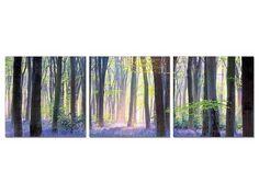 Violet Forest Floor