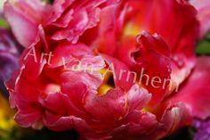 Naturfotografie  *Blüte*