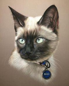 Siamese Cat Portrait (Pastel) by Virginie Agniel