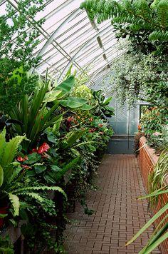Greenhouse, Conservatory, Biltmore Estate, Asheville, North Carolina