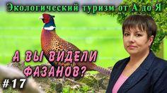 Экологический туризм от А до Я №17.  Фазан.  Яйца фазана. Крылатый