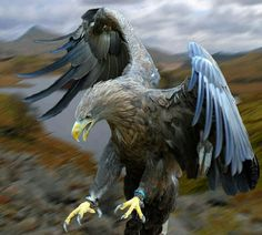 """27 Does the eagle soar at your command and build his nest on high? 28 He dwells on a cliff and stays there at night; a rocky crag is his stronghold. 29 From there he seeks out his food; his eyes detect it from afar. 30 His young ones feast on blood, and where the slain are, there is he."""""""