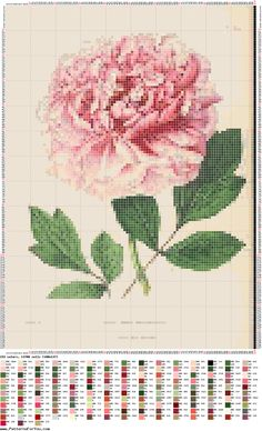 peonia-pivoine-fleur-point de croix-cross stitch-embroidery
