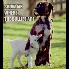 Love Boxers, such sweet dogs!