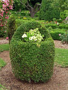 Love this topiary planter.  The Green Animals Topiary Garden. Photo Courtesy The Preservation Society of Newport County