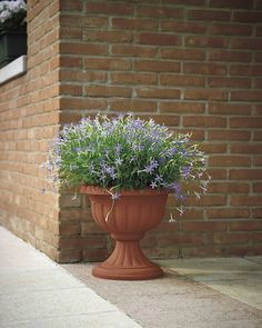 Copa Azem (resina) - Azem vase (polypropylene)  Medidas - Size Ø 30 (cm.30 x 28 h.) lt 57 Ø 40 (cm.40 x 38 h.) lt 135 Ø 45 (cm.45 x 42 h.) lt 205  #decoracion#decor#home #homeandgarden#florist#floristeria #instadecor#pottery#casa#casayjardin #pot#decoration#deco#decoração#jardin#macetas #housedecor#florista#plantas#plants #plant#floreria#plantbox #jardinera#jardineria #cachepot #homedesign #gardencenter #garden #vivero  http://ift.tt/1NHCpzN