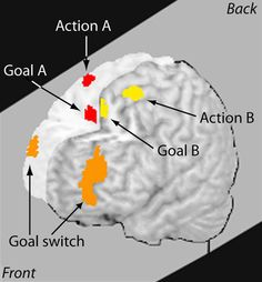 What multitasking does to our brains