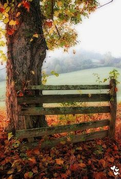 old, abandoned fence segment by the tree.