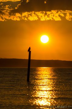 Bald Eagle at Sunset in Edmonds, WA. I took the kids down to Edmonds on Saturday night hoping we might get a good sunset. We did better than that, we got a great sunset and this Bald Eagle resting on the post.