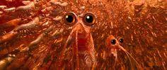 the krill hard truth