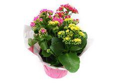 Planting Flowers, Garden, Pretty, Plants, Home, Garten, Lawn And Garden, Gardens, Plant