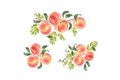 Hand-painted watercolor illustration of peaches. Japan Illustration, Watercolor Illustration, Peach Tattoo, Peach Paint, Fruit Clipart, Watercolor Fruit, Watercolour, Peach Aesthetic, Peach Trees