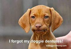 I forgot my dentures!