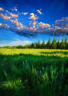 """Fields and dreams"" by Phil Koch"