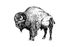 Bison Bull Art Print