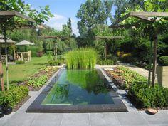 zwemvijver swimming pond