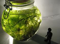 Enter the Biosphere by Sophie Start. As part of the Idea of Nature project, I created 'Tabletop Biospheres' - these are miniature ecosystems in jars containing pond and aquarium life. Without the addition of extra oxygen (the jar is sealed) they can be self-sustaining for up to 3 months, providing a fascinating snapshot of underwater life.