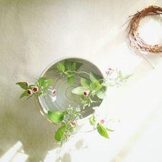 #野の花  #ヘクソカズラ  #野草 #花のある生活 #植物と暮らす  #自然と暮らす #やきもの #plants #wildflower #potterypottery,plants,ヘクソカズラ,wildflower,野草,花のある生活,野の花,自然と暮らす,やきもの,植物と暮らす