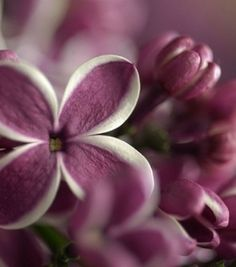 Purple represents nobility, abundance and dignity, but can also stand for creativity and imagination.