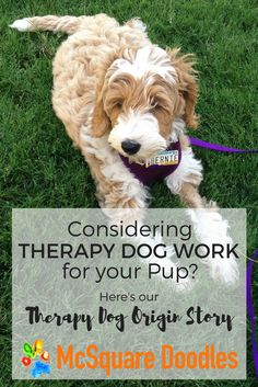 Thinking about therapy dog work for your pup? Here's what inspired us to begin training for certification.