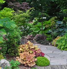 Three Dogs in a Garden: Garden Canadensis, Part 2: Planting Combinations for Shade heuchera 'peaches and cream' in foreground