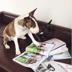 Neville Jacobs, Marc Jacobs Dog