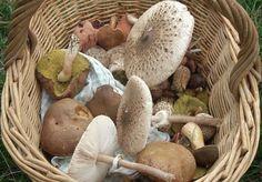 Stuffed Mushrooms, Vegetables, Food, Stuff Mushrooms, Essen, Vegetable Recipes, Meals, Yemek, Veggies