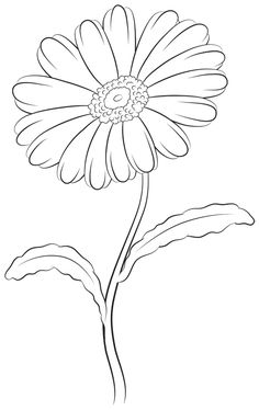 Drawing more details of the upper daisy Drawing more details of the upper daisy