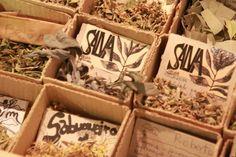 plantas aromaticas - Pesquisa do Google