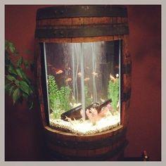 fish tank in a wine barrel. Fish Tank Terrarium, Aquarium Fish Tank, Dwarf Frogs, Indoor Palm Trees, Cool Fish Tanks, Amazing Aquariums, Wine Barrel Furniture, Barrel Projects, Tanked Aquariums