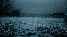 Rain - http://www.fullhdwpp.com/nature/plants-and-flowers/rain/