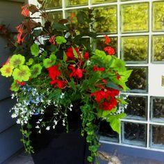 Hanging baskets shade planters on pinterest shades - Summer hanging basket ideas ...