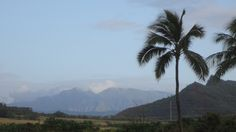 Lihue-Koloa Forest Reserve (I think) - taken May 2012 looking west from Lydgate…