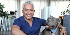 Pack leader Cesar Millan is spillinghis secrets! 10 dog training tips. #puppytrainingbitingcesarmillan