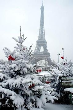 White Christmas in Paris  ♥ ♥ www.paintingyouwithwords.com - Double click on the photo to get or sell a travel guide to #Paris