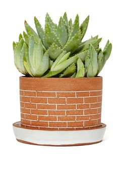 This planter is perfect for those flowers, herbs, or succulents you're trying to keep alive.