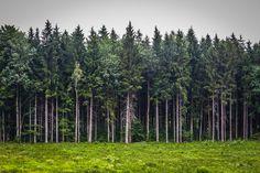 The Black Forrest - Germany Photos - Xan's Eye Photography - Xan Craven