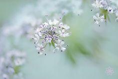 Lace by Jacky Parker on 500px