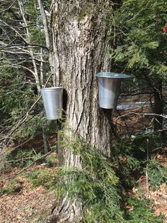 A recent meeting to discuss how Climate Impacts Maple Syrup was held in New Hampshire at the Keene State Young Student Centre on March 9th.  Outside the temperature was in the mid-70s, about 35 degrees above the average high.Five panel...