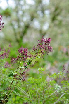 ogrod.krakow.pl Rośliny w centrum Krakowa Plants, Plant, Planets